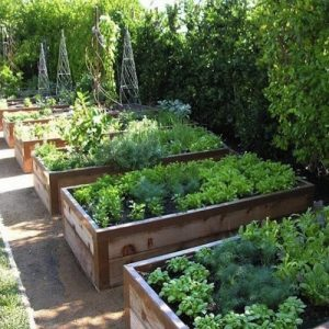 Tips For New Cold Climate Gardeners