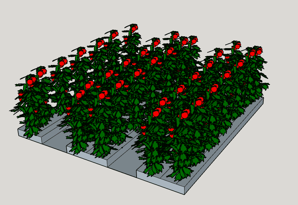 "The 36 inch wide row has room for three planting rows, two at 48 inches and one at 24 inches. Each row can fit six to seven plants per row at 24"" spacing. The wide row design will accommodate 35 total plants.  This means you get a 25 percent higher yield from the wide row."