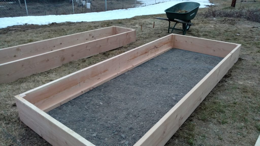 Garden beds built from douglas fir 2x12's and hardware mesh to protect against voles.