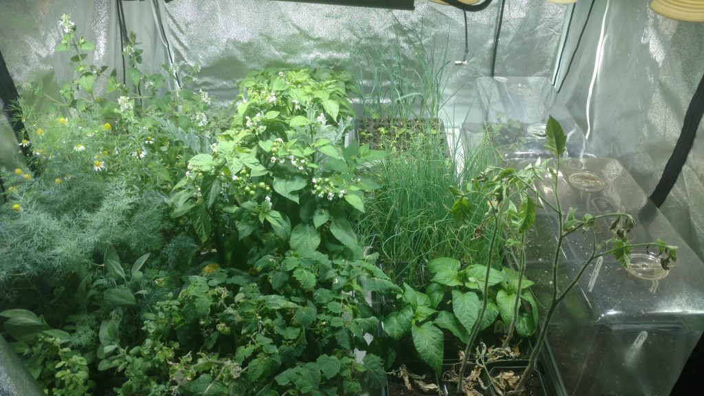 With 15 days to last frost, our indoor garden is as full as it can be. We have some choices to make soon.