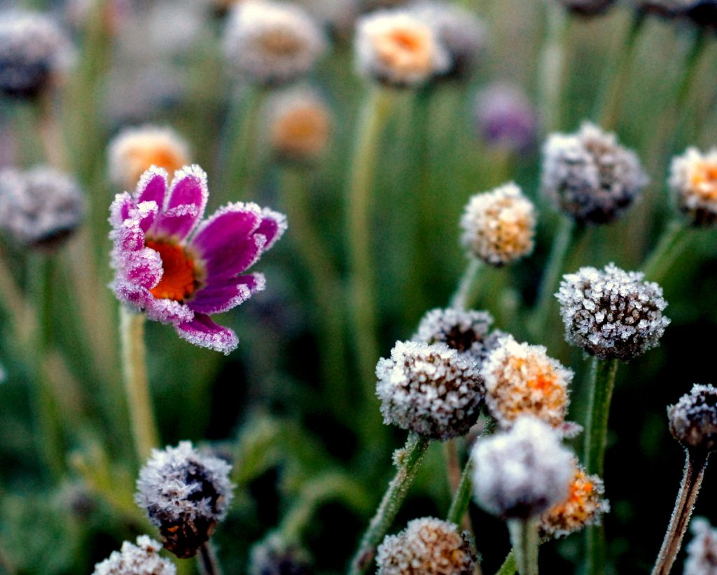 10 Top Cold Weather Gardening Tips